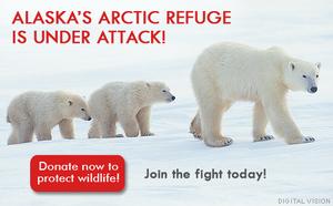 Arcticimage