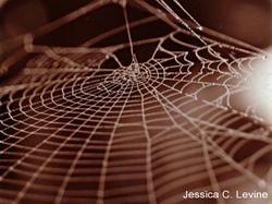 Spiderweb3_1